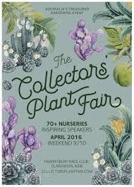 sydney native plants the collectors plant fair 2016 mallee design