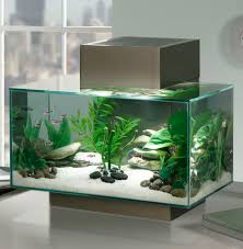 How To Make Fish Tank Decorations At Home Best 25 Aquarium Ideas On Pinterest Aquarium Ideas Amazing