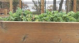 sprout garden coordinator toils through winter drake digital news
