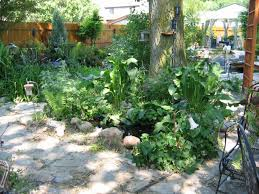 landscaping with big trees dj s lawn yard maintenance in campbell