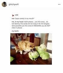 Funny Tumblr Memes - dank memes