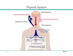 it u0027s not all in your head understanding your thyroid san tan