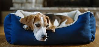 Cuddle Cup Dog Bed Akc Snuggly Cuddle Cup Pet Bed Groupon