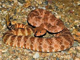 snake season be certain to take care at home and when out and