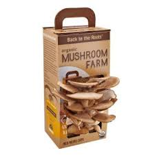 20 in shiitake mushroom log mls1 the home depot
