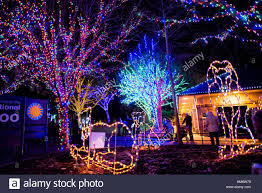 national zoo christmas lights holiday lights at the smithsonian national zoo s zoo lights event in