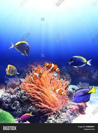 underwater scene anemone tropical image u0026 photo bigstock