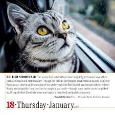 amazon com 365 cats page a day calendar 2018 9781523500796