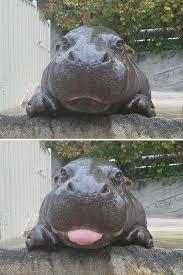 Hippo Memes - 15 best hilarious hippo memes images on pinterest hilarious