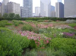 native plants in landscape management eco conscious landscapes fast track the rise of grasses and native