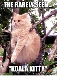 Australian Meme - 8 funny australian cat memes random funny cat