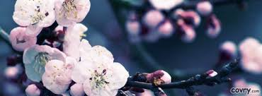 cherry covers covry com