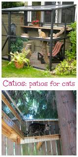 Enclosed Backyard Apparently Catios Are A Thing Now Backyard Patios And Cat