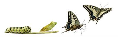 the caterpillar and the butterfly international it s