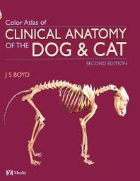 Dog Anatomy Book Colour Atlas Of Clinical Anatomy Of The Dog And Cat By J S Boyd