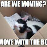 Moving Meme - cat in the box meme generator imgflip