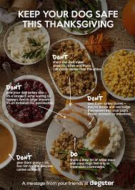 for thanksgiving help spread the word on food safety for dogs