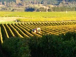 Prix Du Fioul Oise by Vintage In Marlborough 2017 Wine Portfolio