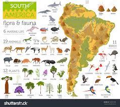 Hummingbird Map South America Flora Fauna Map Flat Stock Vector 765647596