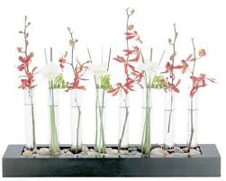 Test Tube Vase Holder 44 Best Test Tube Ideas Images On Pinterest Test Tubes Google