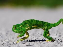 40 best lizard in your gizzard images on pinterest lizards