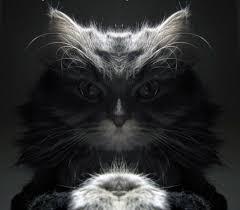Villain Meme - bond villain cat meme cat planet cat planet