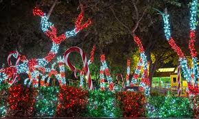 san antonio tree lighting 2017 seaworld san antonio seaworld san antonio groupon
