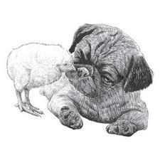 vector sketch dog pug breed hand drawing vector stock vector