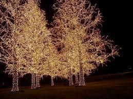 nashville christmas lights 2017 149 best nashville images on pinterest nashville tennessee