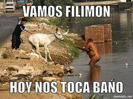 burro no quiere baño comicas pinterest