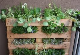 gardening classes chicago indoor herb gardening dabble