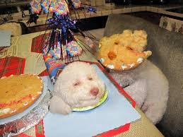 Birthday Dog Meme - image 46058 birthday dog know your meme