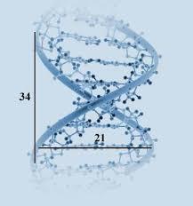 golden ratio dna spiral the very program of life itself the dna molecule contains the golden