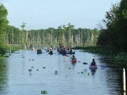 Louisiana Lakes images Canoe kayak rentals from fobb at bblnwr friends of black bayou jpg