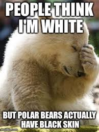 Polar Bear Meme - facepalm bear meme imgflip