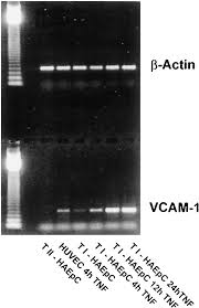 what is 138 311 as a percent monocyte migration through the alveolar epithelial barrier