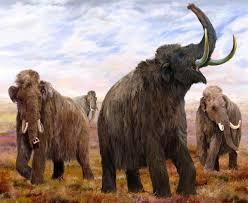 mammoth u0027s stand wrangel island herd died