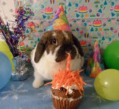 rabbit birthday bunnies house rabbit pet rabbit pet bunny pictures