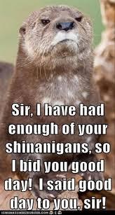 Otter Memes - 16 best otter memes images on pinterest ha ha otters and funny
