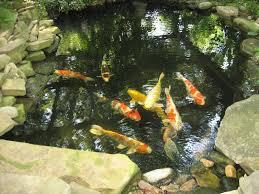 triyae com u003d backyard koi ponds and gardens various design