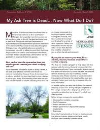my ash tree is dead now what do i do e2940 msu extension