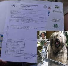 Amara Baden Baden Gos D U0027 Atura Catalan Sheepdog Perro De Pastor Catalan Amara Bea