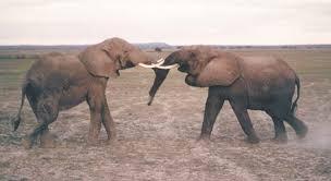 elephant mammal britannica com