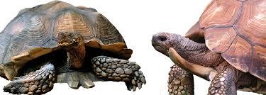 t u r t l e power part 4 the little known paleobiology of the