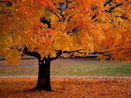 best wallpaper online autumn wallpapers