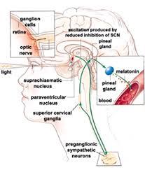 Seasonal Affective Disorder Light Seasonal Affective Disorder Sad Circadian Rhythms And Genes