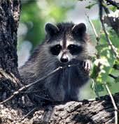 wildlife texas almanac