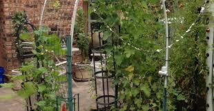 pergola arch trellis prodigious garden arch with trellis sides