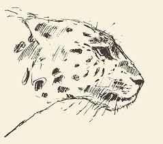 lion face sketch drawing clip art vector images u0026 illustrations