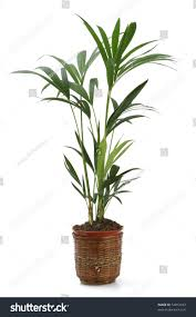 ornamental plants over white background stock photo 52012453